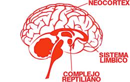neurocualitativa