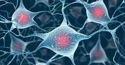 neuroni_cervello